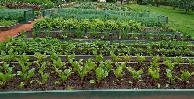 Какие работы в саду и огороде следует делать в апреле 2021