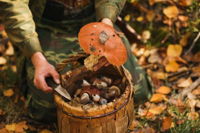 В Минприроды были объяснены правила сбора лесных ягод и грибов по законам РФ