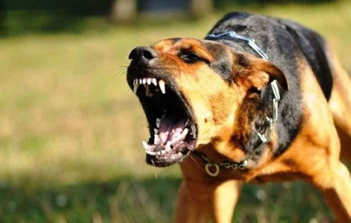 На каких людей чаще всего нападают собаки, и с чем связана такая выборочность