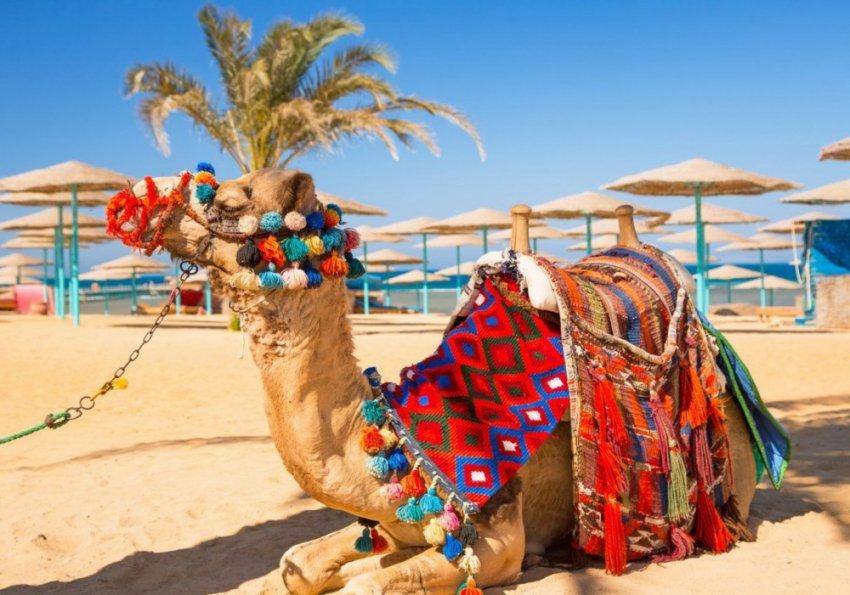 В АТОР предупредили о росте цен на билеты в Египет после открытия границ