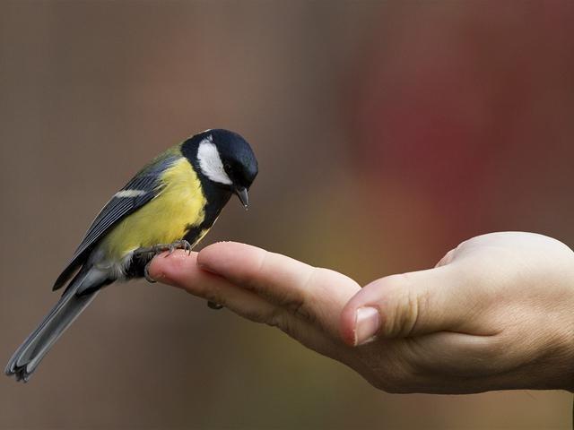 Может ли залетевшая в окно птица привести к неудачам в вашей жизни