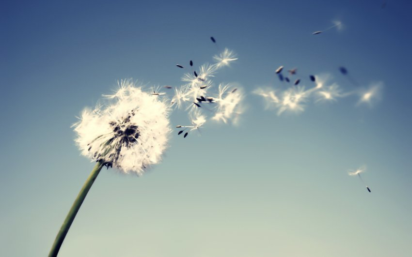Народные приметы 16 июня, в день Лукьяна Ветряка