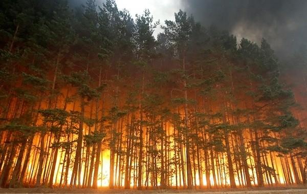 За прошедшие сутки в Якутии ликвидировано 37 лесных пожаров