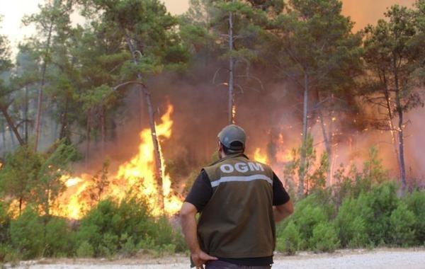 Более 400 человек пострадали в результате пожаров в Турции