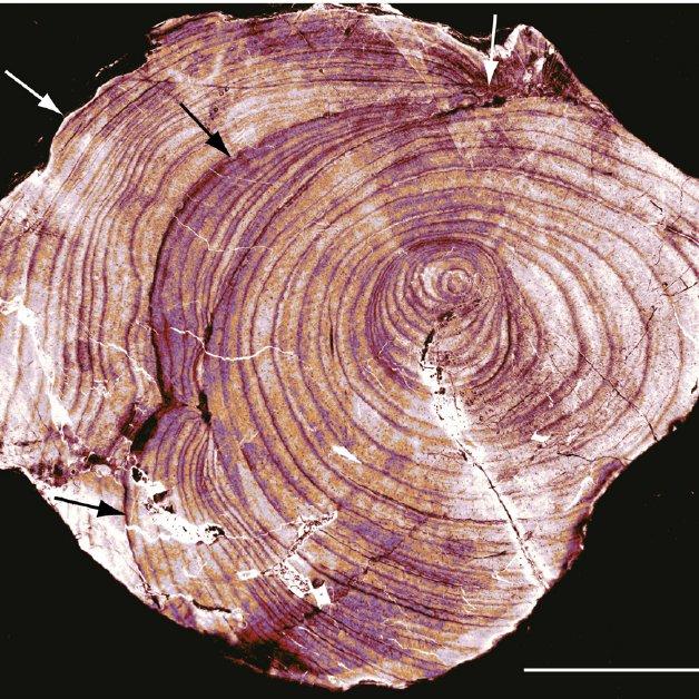 На земле росли гигантские грибы, которые были выше деревьев