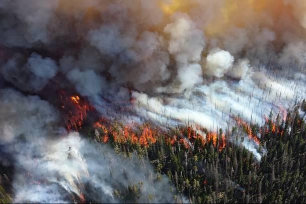 Петон НИПИ НГ помог тушить пожары в Ленинградской области