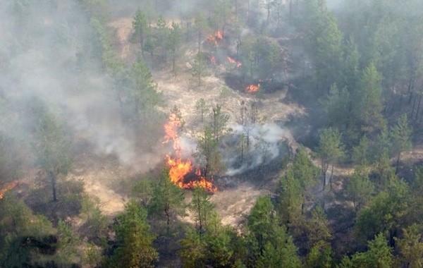 В Марий Эл за четверо суток сгорели более 1,3тыс. гектаров леса